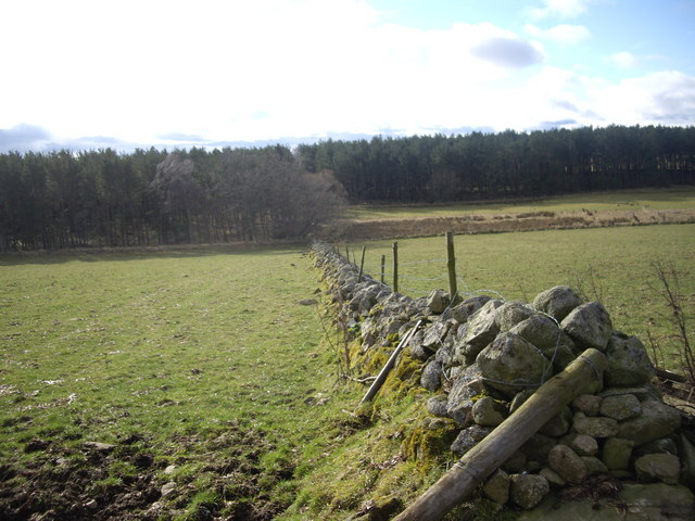 Field boundary wall
