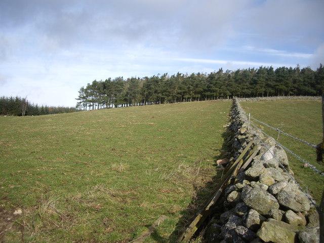 Field boundary wall