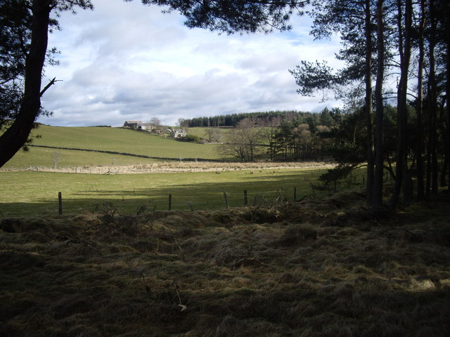 View from woodland edge
