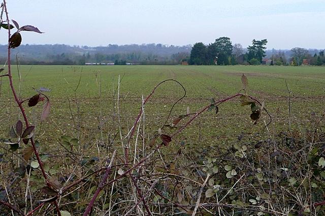 Fields south of Enborne Road