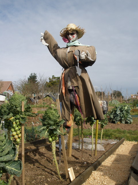 Scarecrow, Greenway Lane Allotments