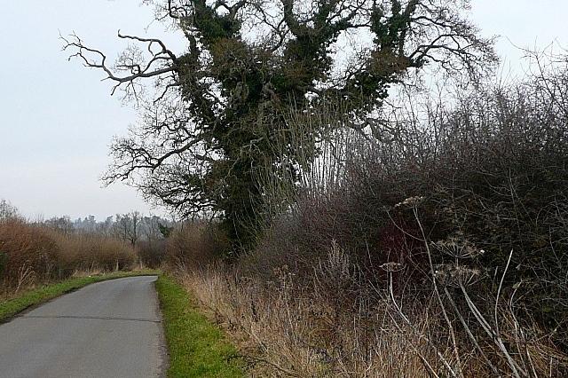 Lane north of Skinner's Green