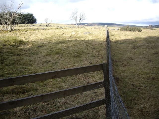 Former woodland edge (left)