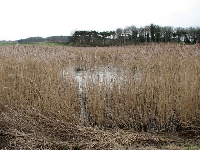 Snipe Marsh