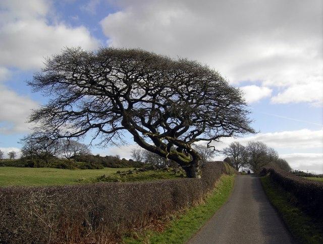 Wind Beaten Tree