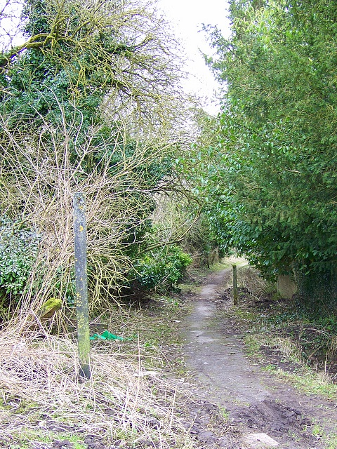 Footpath to Fifield