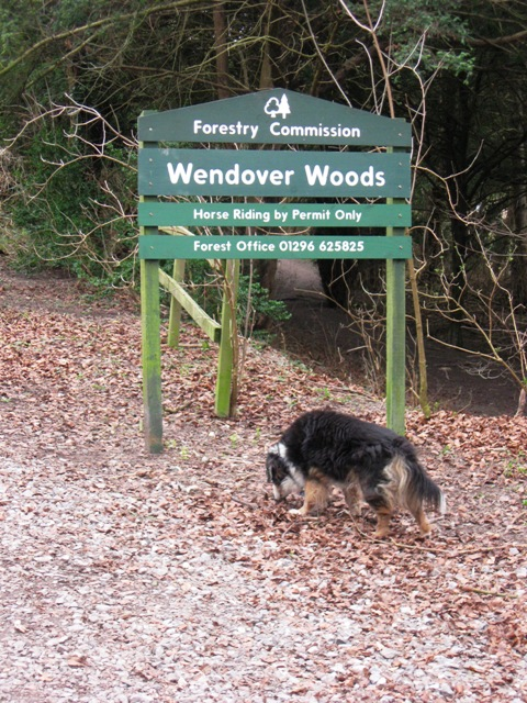 Wendover Woods - Start of Walk