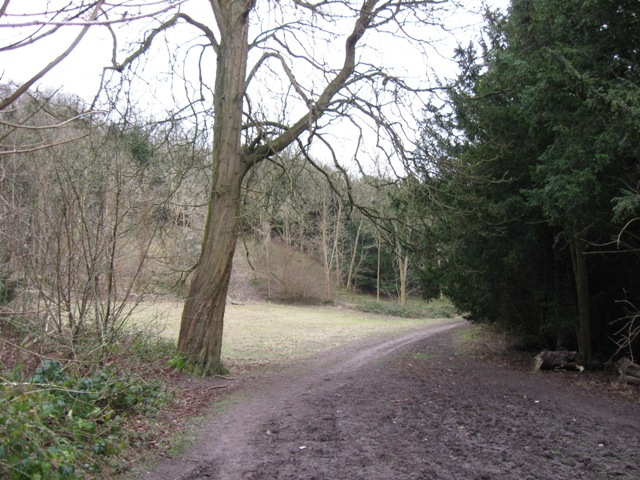 Small Meadow in Wendover Woods