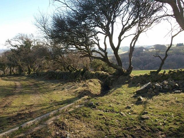 Cut-off, Holne Bridleway 4