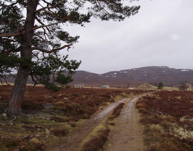 East Foregin farm road
