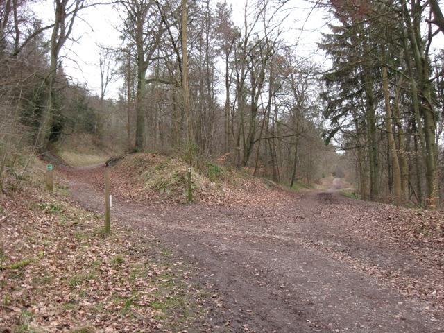 Holloway and woodland road in Wendover Woods