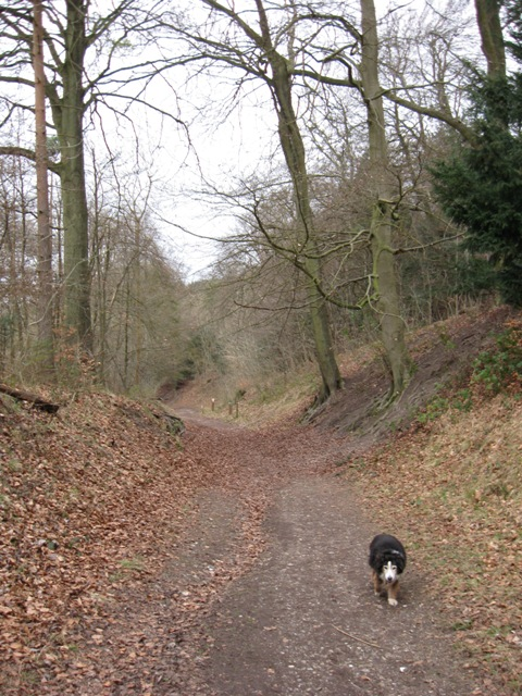 Holloway in Wendover Woods