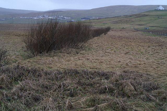 Aith Meadows, Cunningsburgh