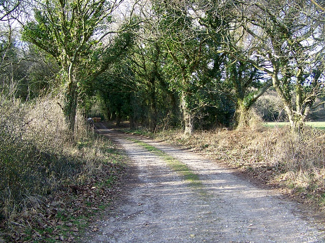 Bridleway into Puddletown Forest