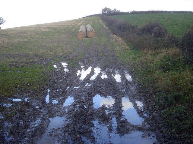 Damp field north of Yatton