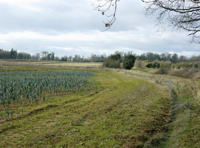 2009 : A field of leeks