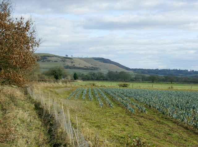 2009 : South east on the lane to Heddington