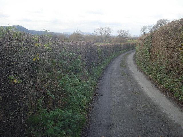 Lane near Sasel Wood - 1