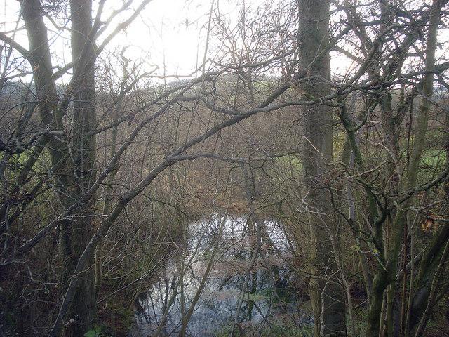 Pond near Sasel Wood
