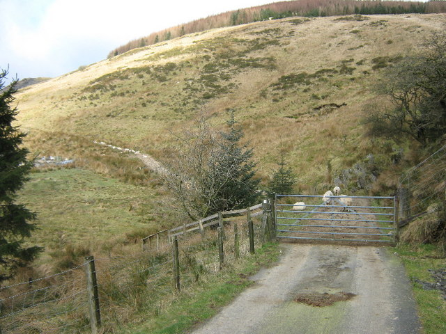 Gate near Waenllefenni
