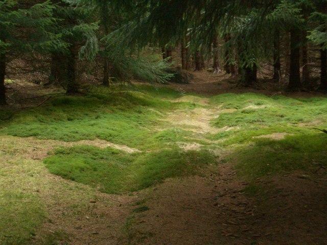 Meall Uaine track, Kindrogan