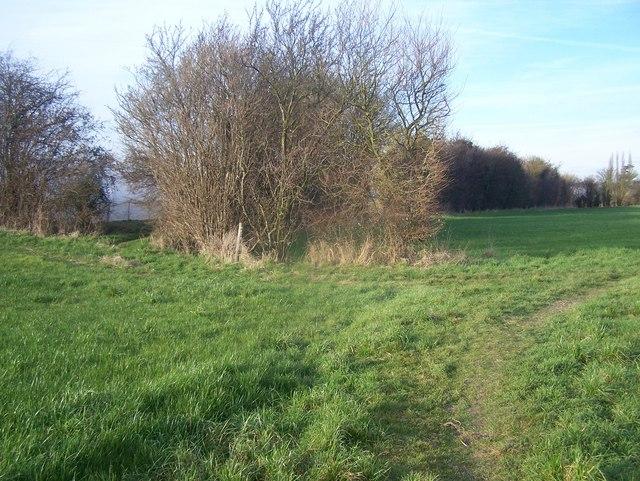 Footpath junction near polytunnels