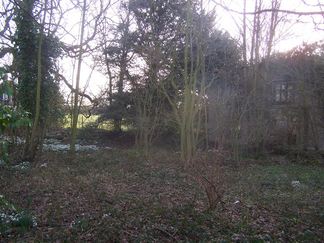 Derelict House and snowdrops