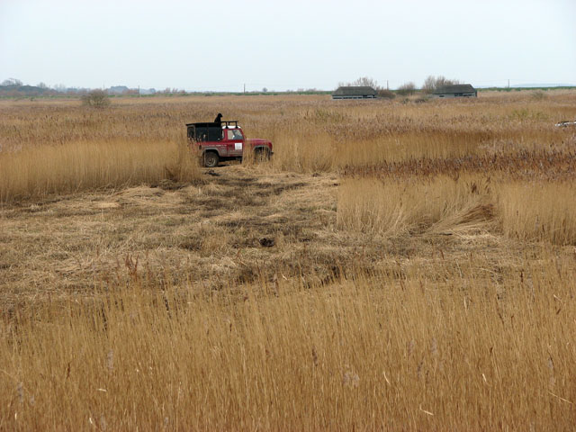 Reed cutting by The Skirts