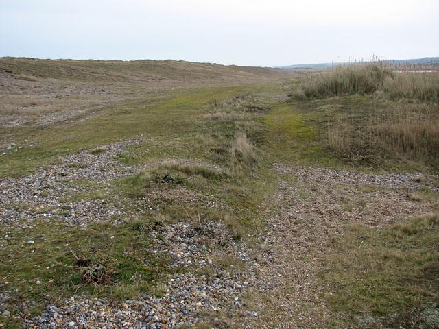 Shingle bordering on marshland
