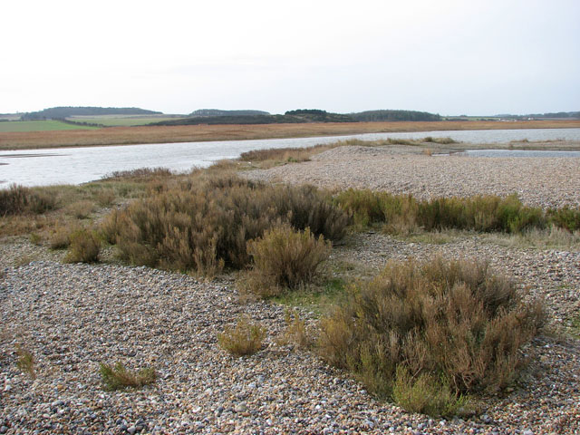 Salt marsh covered by shingle