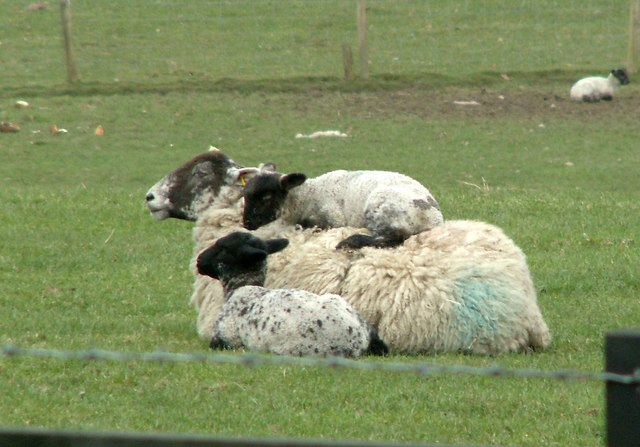 A Happy Family At Dean Hill Farm