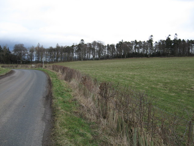 Minor road and grazing near Hermiston