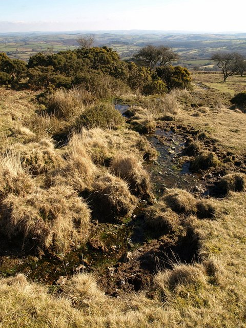 Tiny stream on Holne Moor