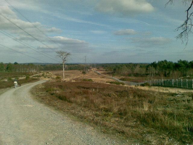 The edge of Surrey Heath