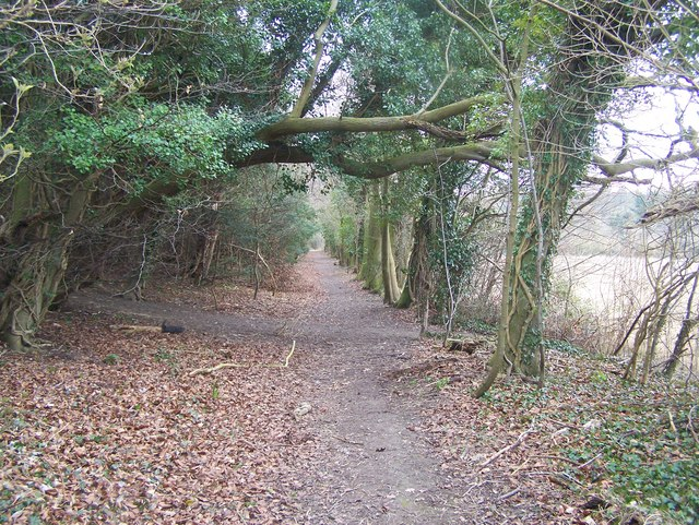 Footpath junction on track through trees