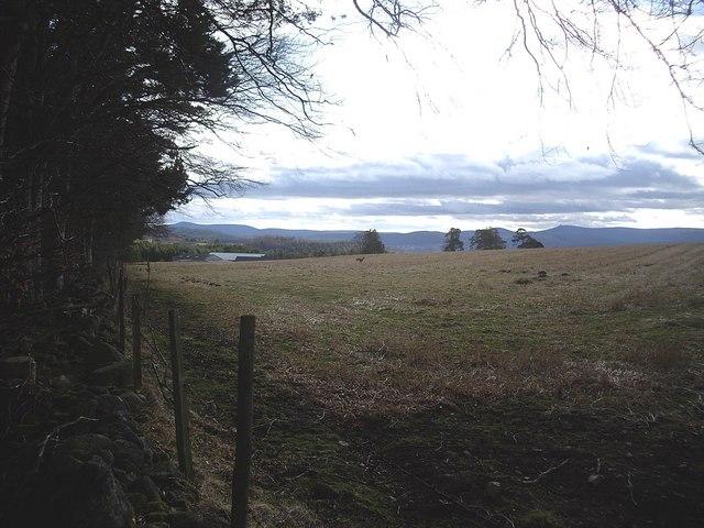 Field by Gordonstone
