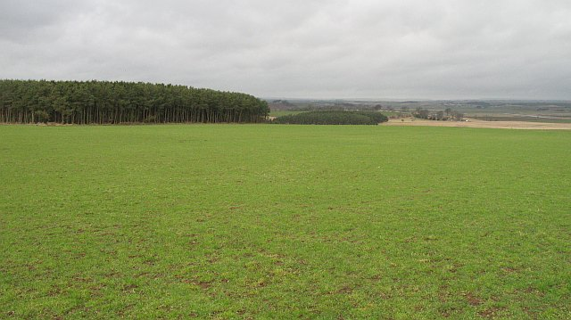Grassland, Hillhead