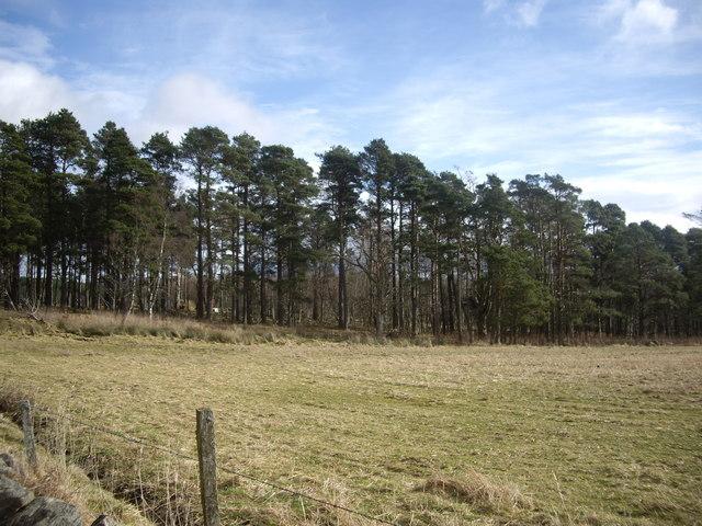 Forest edge by Gordonstone
