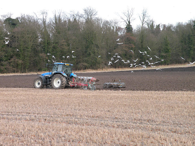 Ploughing Tractor with Seagull Accompaniment