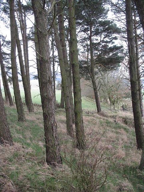 Goose Wood