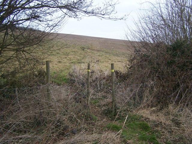 Footpath junction on fenceline