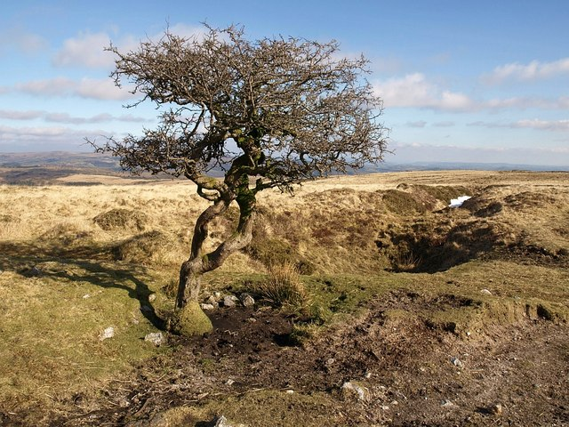 Tree and tin workings