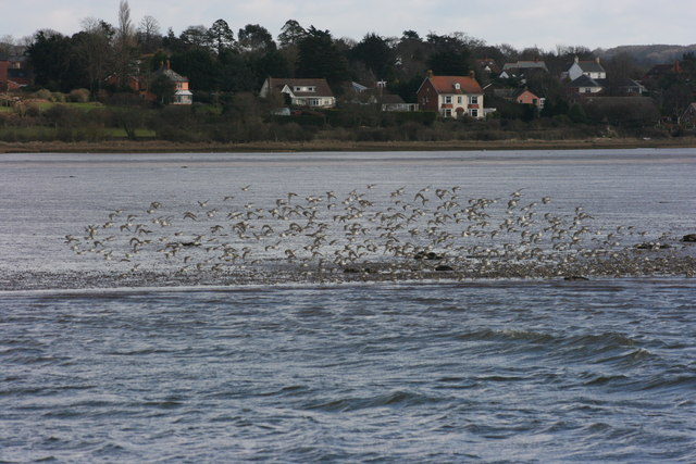 Exton village with a flock of Dunlin