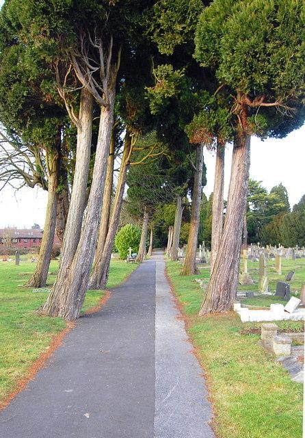 Yew Tree Avenue
