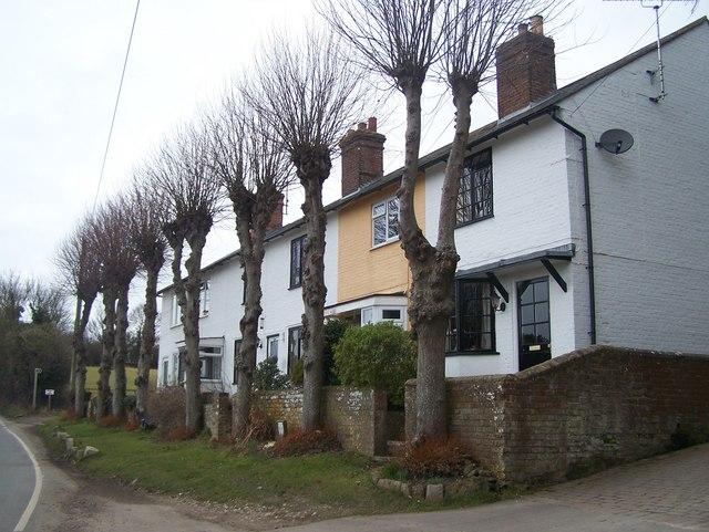 Limetree Terrace