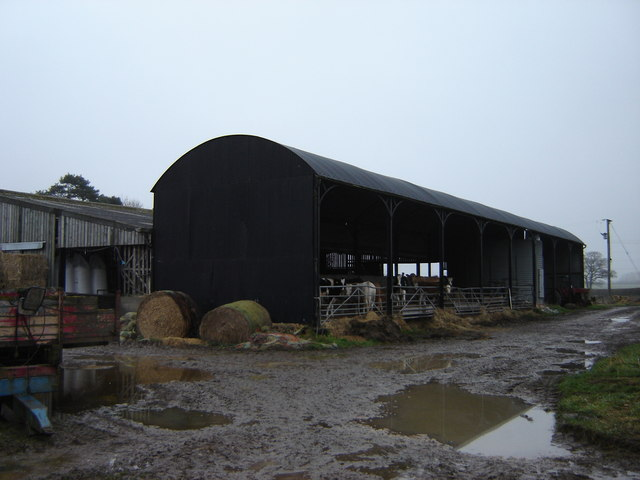Dodholm  Farm  cattle  in  barn