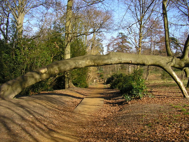 Tree arch at Lily Hill Park