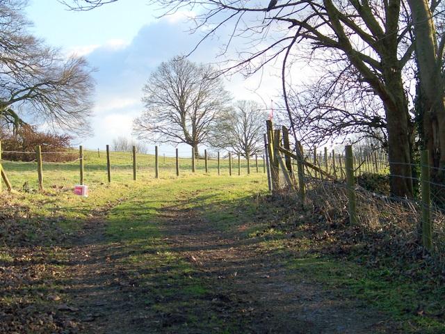 Bridleway near Stinsford