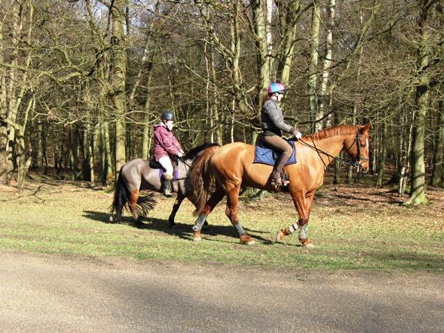 Horse riders on Monument Drive, Ashridge