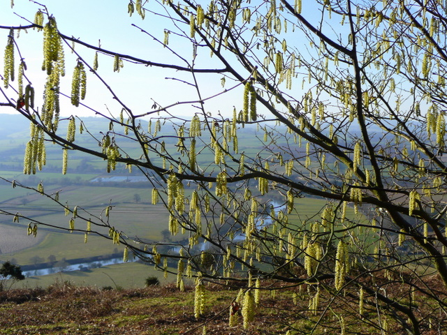The Wye through hazel catkins